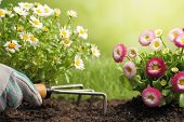 Planting Flowers in a garden