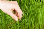 foto of groundwater  - Hand with a test tube and grass - JPG