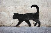 Black Cat Graffiti
