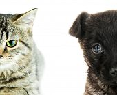 Cute cat and dog faces isolated on white