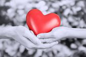 Red heart in hands on grey background