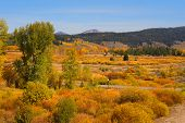 Beautiful Autumn landscape in Yellowstone national park