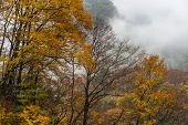 forest in autumn, yunnan china.