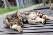 stock photo of tabby-cat  - Tabby cat lying on a chair to sleep in the cat village of Houtong - JPG