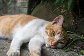 Ginger tabby cat lying in the corner to rest in the cat village of Houtong, Taiwan