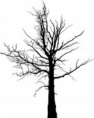illustration with black dry large tree silhouette isolated on white background