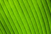 Natural Macro Photo Background With Green Leaf Texture