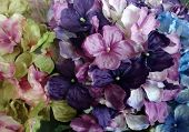 Multicolor flowers