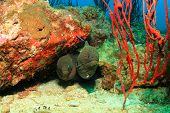 Two Giant Moray Eels