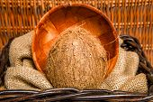 image of significant  - Coconut is a significant and important crop - JPG