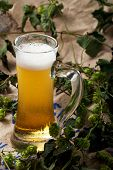 image of hop-plant  - glass of beer with hop plants on a rug - JPG