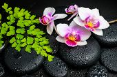 Spa Background Of White With Red Orchid (mini Phalaenopsis) Flower, Green Leaves Fern And Zen Stones