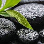 Closeup Beautiful Spa Background Of Green Branch Bamboo On Zen Basalt Stones With Dew, Macro