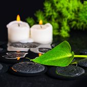Spa Concept Of Green Leaf Calla Lily, Foliage And Candles On Zen Basalt Stones With Drops In Water,
