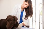 Examining A Dog's Bandage