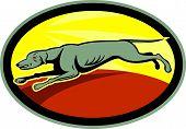 Greyhound Dog Jumping Side Oval Cartoon