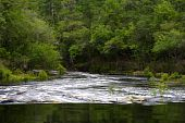 stock photo of suwannee river  - Little Shoals on the Suwannee River - JPG
