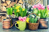 Постер, плакат: Spring Flowers Tulips Snowdrops And Narcissus