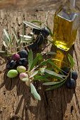 olive branch with oil