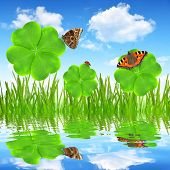 clover leaf and butterflies