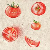 Watercolor tomato illustration with different tomatoes on paper background