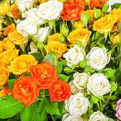 Big Bunch Of Beautiful Roses