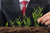 Businessman Planting Sapling