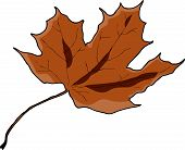 Dry brown leaf