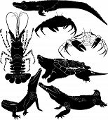 crocodile Lobster Crawfish crab turtle