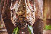 Old Rhino Portrait In Zoo