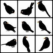 Set Of Cute Black Birds