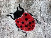 stencil grafitti ladybug