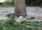 picture of baby cat  - Kitten - JPG