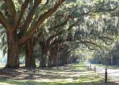 pic of slavery  - Slavery Plantation with dirt road driveway - JPG