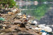 stock photo of polution  - Birds on the river between garbage - JPG