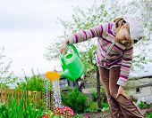 pic of pullovers  - The girl of nine years in a warm pullover and brown jeans waters color in a garden from a green watering can - JPG
