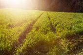 pic of track field  - track in green field in evening sunshine - JPG