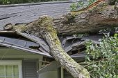 picture of impaler  - A storm fells a large oak tree which crushes the roof of a small house - JPG