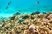 pic of coral reefs  - Coral reef and fish at Seychelles - JPG