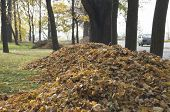 stock photo of fallen  - pictured heaps of fallen leaves in autumn city park