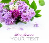 image of violet flower  - Lilac flowers bunch over white wooden background - JPG