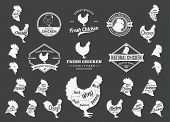 Постер, плакат: Vector Chicken Logo Icons Charts And Design Elements