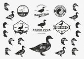 Постер, плакат: Vector Duck Logo Icons Charts And Design Elements