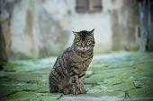 Street cat portrait poster