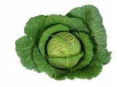 Big green cabbage