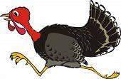 runaway turkey