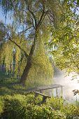 Old Fishing Platform Under Willow Tree