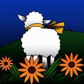 White Sheep.