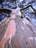 Bark On A Tall Tree poster