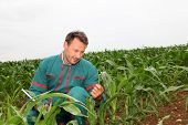 Farmer with electronic tablet analyzing corn field